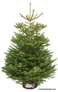 Isabelle's Christmas Advent Calendar: Day 8 – Win A Real 6ft Christmas Tree WINNER ANNOUNCEMENT