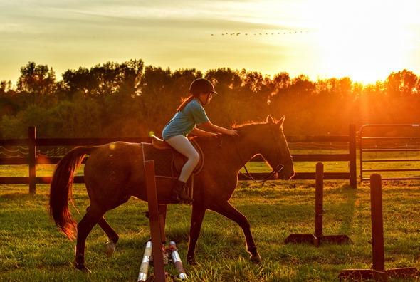 Horses: Brushing Boots