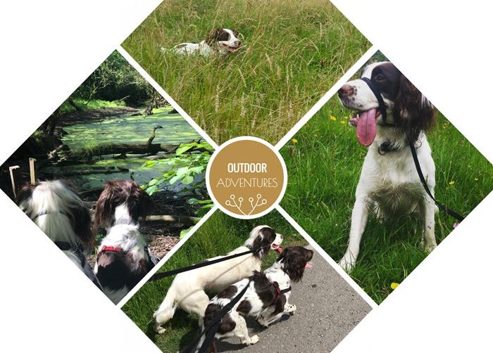 Outdoor Adventures With James Wellbeloved