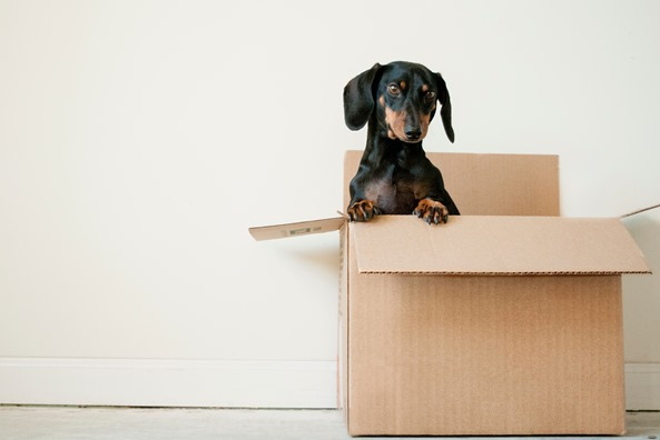 Packing Tips When Moving or Redecorating