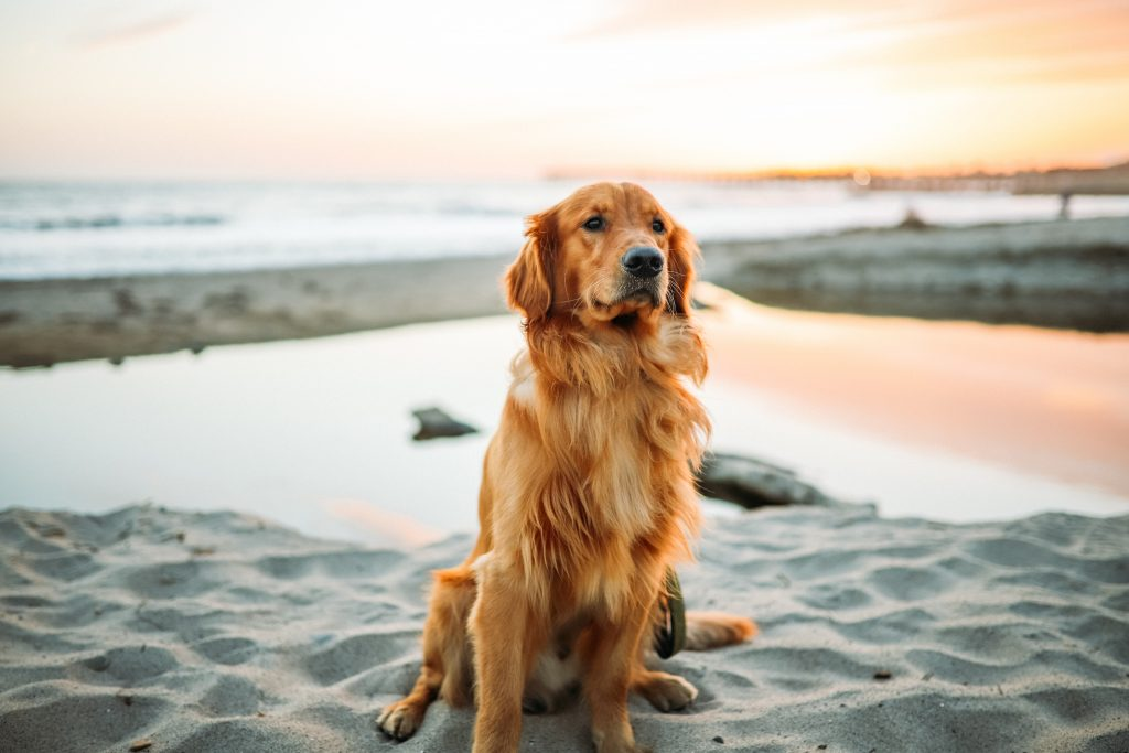 Top 5 Perfect Gifts for Pet Owners